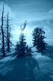 Winter scene. Pine trees on the top of snow covered hill Royalty Free Stock Photos