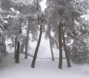 Winter scene. In mountain forest royalty free stock images