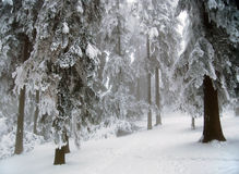 Winter scene. In mountain forest royalty free stock photo