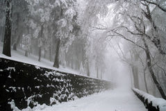 Winter scene. In mountain forest royalty free stock image