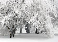 Winter scene. In mountain forest stock photo