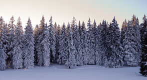 Winter scene Royalty Free Stock Photo