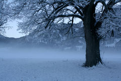 Winter scene 5 Royalty Free Stock Photo