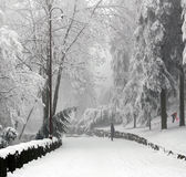 Winter scene. In forest mountain stock photography