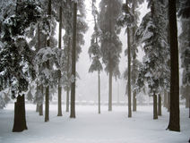 Winter scene. In mountain forest stock photos