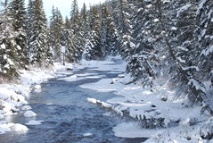 Winter Scene. River in winter in Colorado Royalty Free Stock Photo