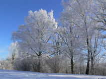 Winter scene. Hoar-frosted trees in early winter morning Stock Photo