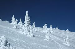 Winter scene. Snow winter scene on Kopaonik mountain Stock Images