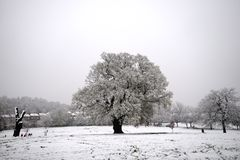 A winter scene Royalty Free Stock Photo