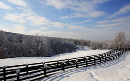 Winter Scene 7120 Royalty Free Stock Image