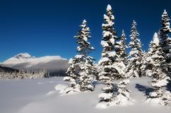 Winter scene. Scenic view of snow covered trees with mountains in background, Jasper National park, Alberta, Canada Stock Photography