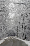 Winter Scene. Of pond and snow covered trees Stock Image