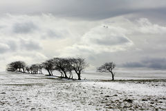 Winter scene. Beautiful winter scene with trees and fields Stock Image
