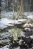 Winter scene at Abernethy Forest in the Cairngorms. Winter scene at Abernethy Forest in the Cairngorms National Park of Scotland Stock Photo