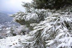 Winter Scene. Beautiful Winter Scene At Mountain Stock Photo