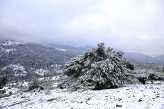 Winter Scene. Beautiful Winter Scene At Mountain Royalty Free Stock Image