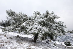 Winter Scene. Beautiful Winter Scene At Mountain Stock Image
