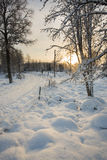 Winter scene. A beautiful winter scene in Sweden Royalty Free Stock Photo