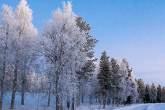 Winter scene. Royalty Free Stock Images