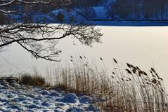 Winter scene of branches and reeds Royalty Free Stock Images