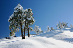 Winter scene in Bryce Canyon National Park Royalty Free Stock Image