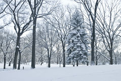 Winter Scene Central Park Stock Image