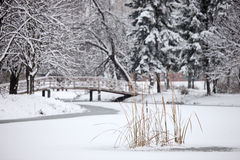 Winter scene from the city park Royalty Free Stock Images