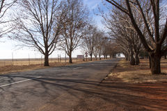 Winter Scene of Country Road Lined with Leafless Trees Royalty Free Stock Images