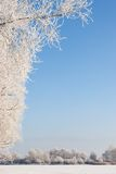 Winter scene covered with snow Royalty Free Stock Image
