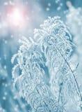 Winter scene. Royalty Free Stock Photos