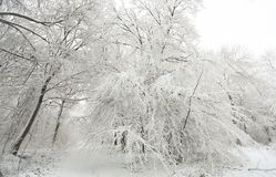A winter scene of the footpath and the trees covered in snow in Balls Wood, Hertford Heath, Uk. A stunning winter scene of the footpath and the trees covered in Royalty Free Stock Photo