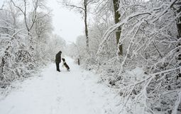 A winter scene of the footpath and the trees covered in snow and an English Springer Spaniel Dog and his owner walking in Balls Wo. A winter scene of the Stock Photography