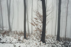 Winter scene forest Royalty Free Stock Photo