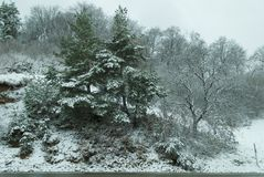 Winter scene in forest. Peaceful winter landscape with snow covered trees Royalty Free Stock Photo