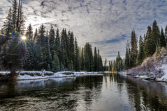 Winter scene in a forest with a river Royalty Free Stock Images