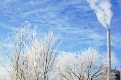 Winter scene frosted branches Royalty Free Stock Images