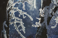 Winter scene, frosty branches Stock Images