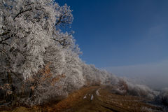 Winter scene. Frozen forest just as the fog lifted away Royalty Free Stock Images
