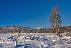 Winter Scene on a frozen high mountain lake. Lone tree in a frozen lake in the mountains Stock Image