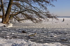 Winter scene: frozen lake and tree Royalty Free Stock Photos