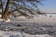 Winter scene: frozen lake and tree royalty free stock photos