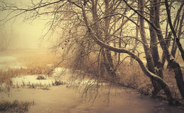 Winter scene in the frozen park Stock Images