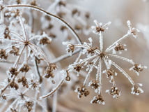 Winter scene. With frozen plants stock photo