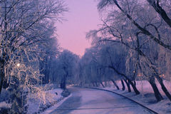 A winter scene Stock Images