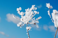 Winter scene. Frozenned flower close up Royalty Free Stock Images