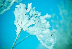 Winter scene. Frozenned flower close up Stock Photos