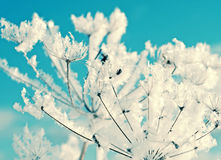 Winter scene. Frozenned flower close up Stock Image