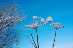 Winter scene .Frozenned flower Royalty Free Stock Photos