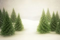 Winter scene with green pine trees and snow. Winter scene with green pine trees and falling snow- Golden brown glow Royalty Free Stock Images