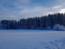 Winter scene in Hedmark county Norway. Blue Tone in the evening. The Trees are covered in snow stock photography